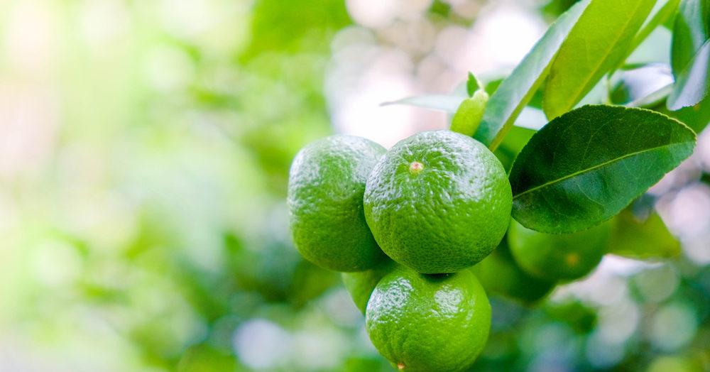 3 ประโยชน์ของ มะนาว ส่งผลดีกับสุขภาพที่หลาย ๆ คนยังไม่ทราบ บอกเลยว่าไม่ควรพลาด