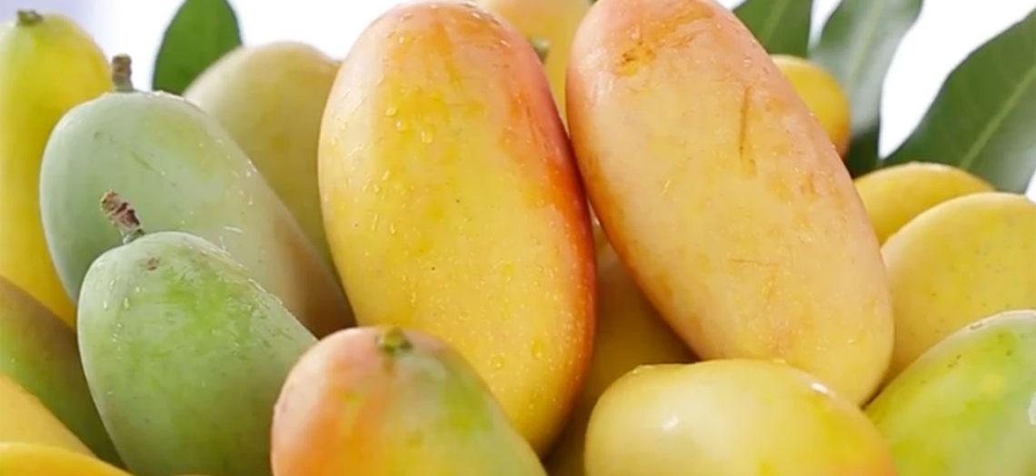 3 ประโยชน์ของมะม่วง ที่บอกเลยว่าอร่อยดีมีประโยชน์มาก ๆ เป็นผลไม้ที่มีคุณค่ามาก ๆ